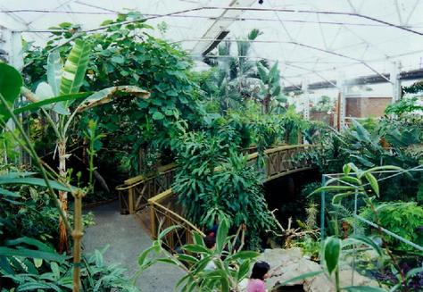 p209813 victoria crystal_garden_tropical_plants_1999 - Crystal Garden