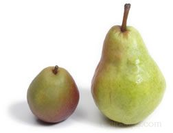 pear_seckel2