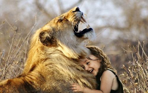 lion-3012515_640